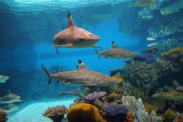 Blacktip Reef