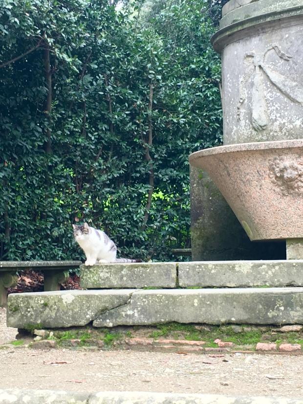 More gardens, more cats