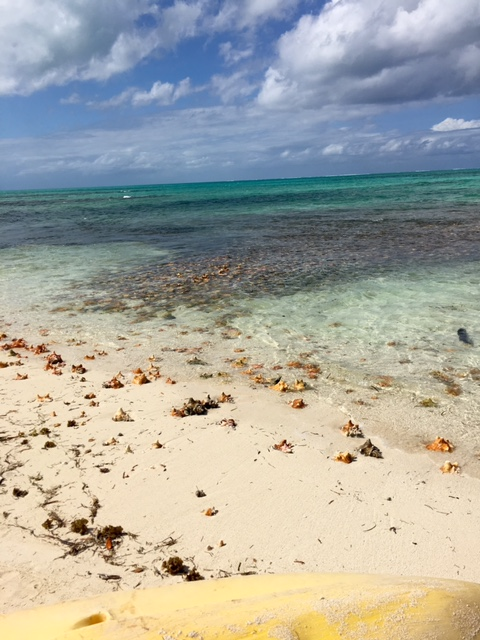 Conch shell islands!
